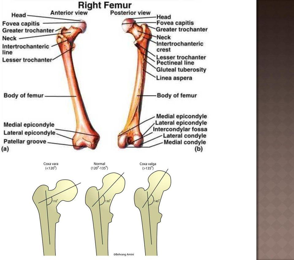 Elülső keresztszalag (LCA) szakadás, elülső keresztszalag sérülés - Súlypont Ízületklinika