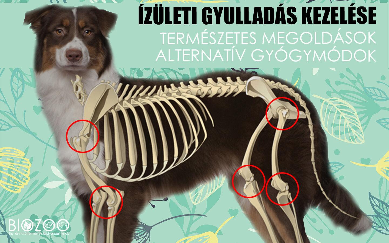 izületi betegség kutyáknál