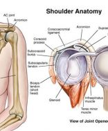 a vállöv és a vállízület csontjainak károsodása