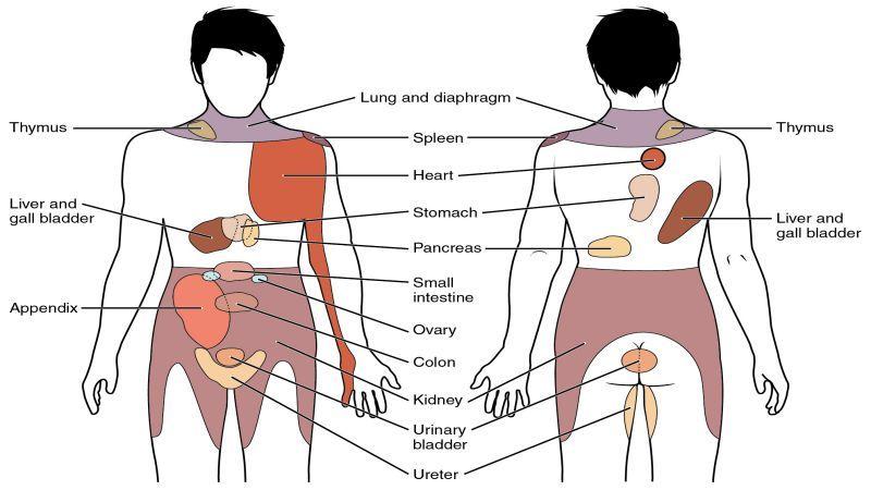 a könyök ízületi fájdalmak a bal láb térdének ízületi gyulladása
