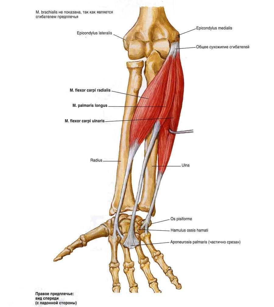 mi a helyzet a vállízület artrózisával