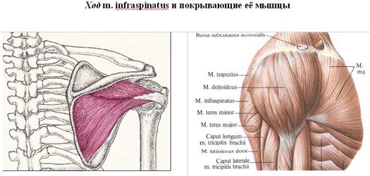 a distalis interfalangeális ízületek deformáló artrózisa)