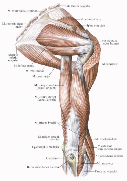 Fájdalom a jobb oldali vállízületben: okok, betegség jelei, kezelés - Osteochondrosis -