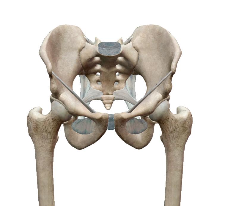 csípőízületi tünetek és kezelési áttekintés)