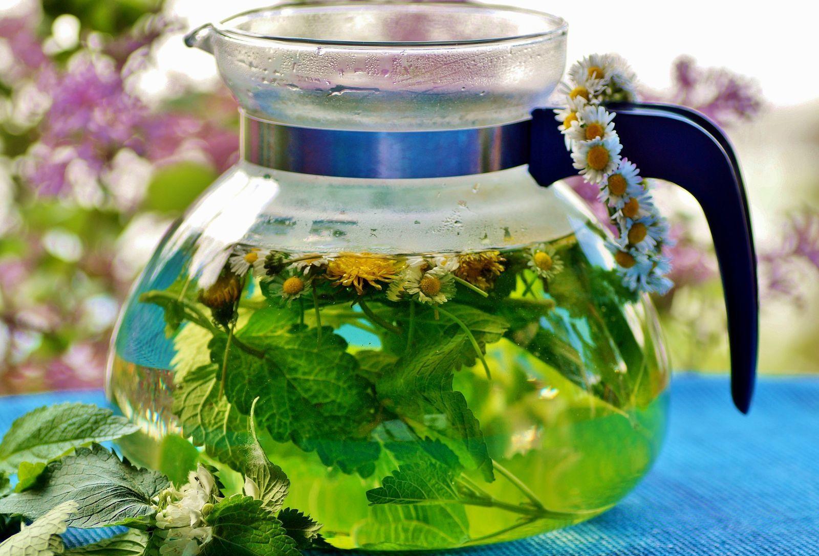 közös gyógynövények