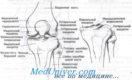 Térd fájdalma (oldalirányú) | Marianna Durova