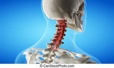 gerinc izuleti gyulladása