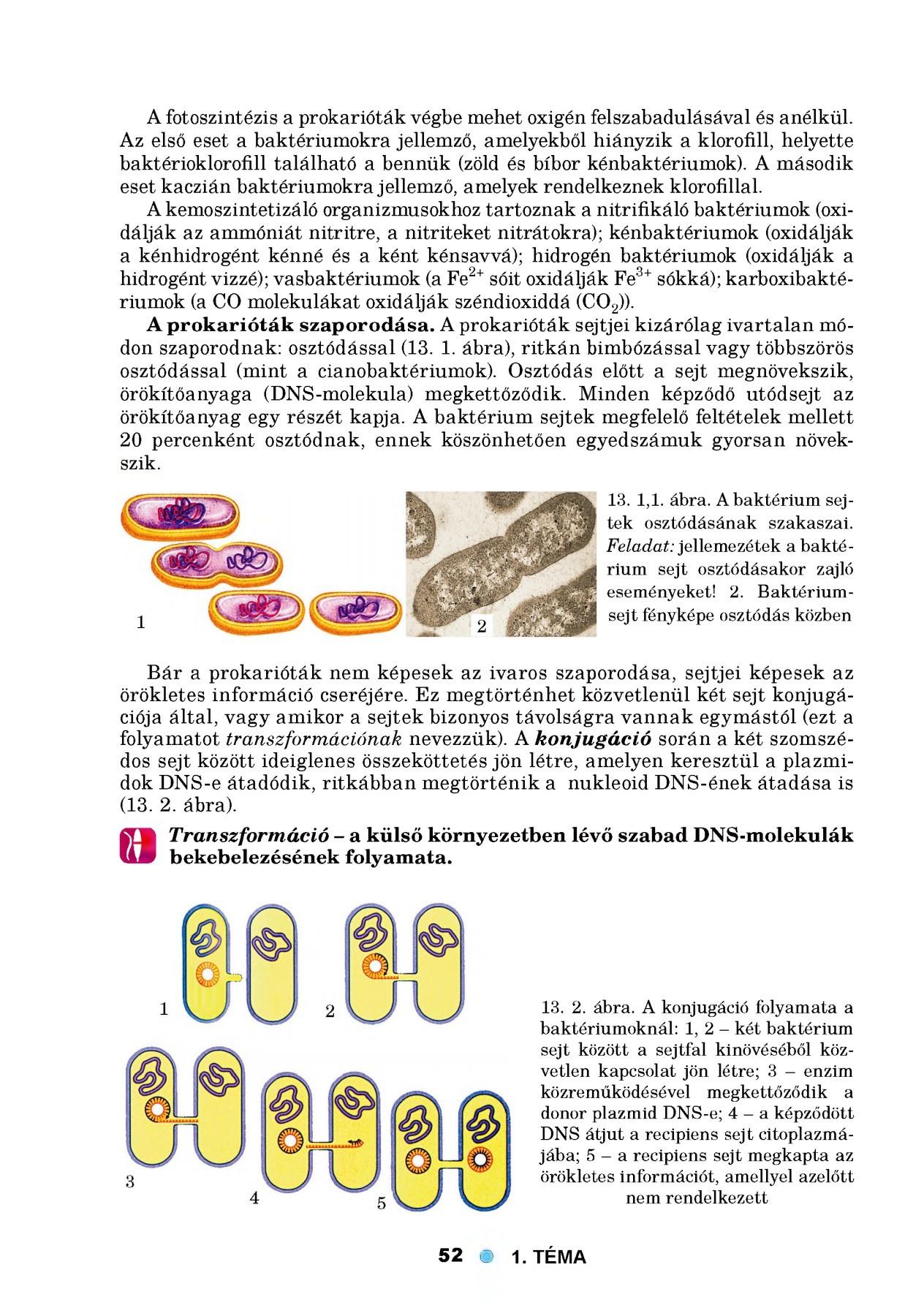 Szimpatika – A betegségek lelki háttere