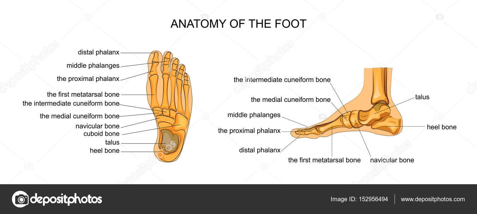 Én nem ilyen lábat akartam - Élet végtagfejlődési rendellenességgel