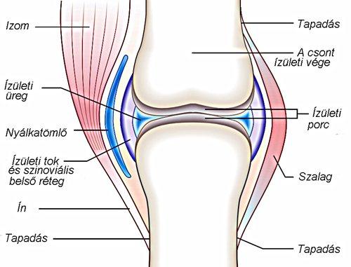 a fájdalom oka és a térd deformációja)
