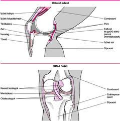 izom- és ízületi fájdalmak pszichoszomatikája)