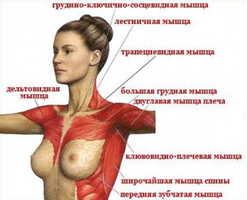 nyaki osteochondrozis kenőcskezelési áttekintések)
