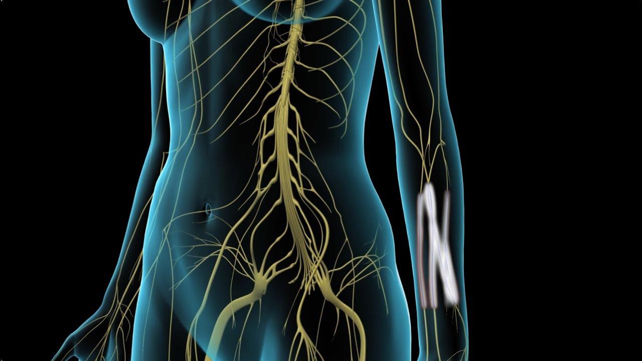 arthrosis kezelés sevastopolban