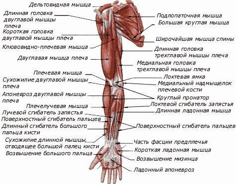 szakaszos ízületi fájdalom az egész testben tapaszok izületi gyulladásra