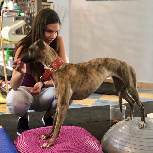 kutya szőr ízületi kezeléshez)