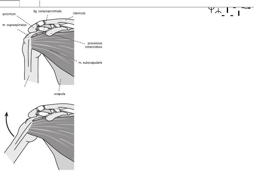 a térdízület kezelésének deformált osteoarthrosis-ja)