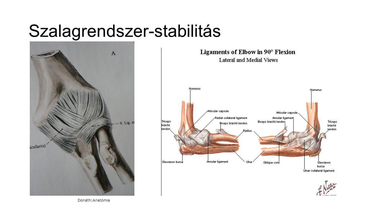 könyökfájdalom anatómia