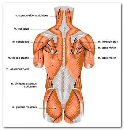 a mellkasi régió osteokondrozisának eszközei