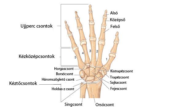 miért fáj a kéz ujjai ízületei)