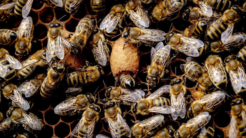 Németh Méhészet méz - propolisz - tökmagolaj - almaecet | Németh Zsolt méhész honlapja