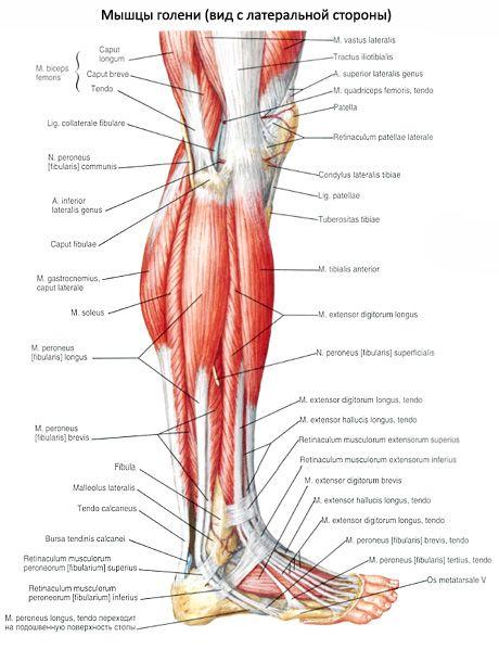 térdfájdalom tünetei és kezelése)