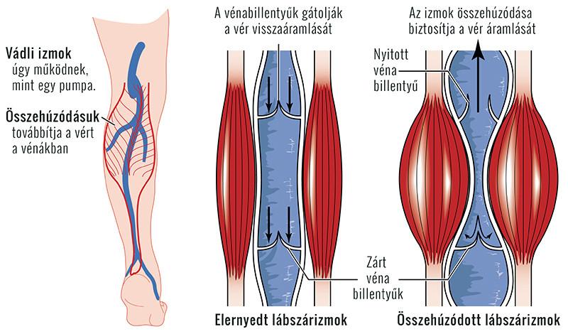 omega 3 ízületi fájdalmak esetén trágyával való együttes kezelés