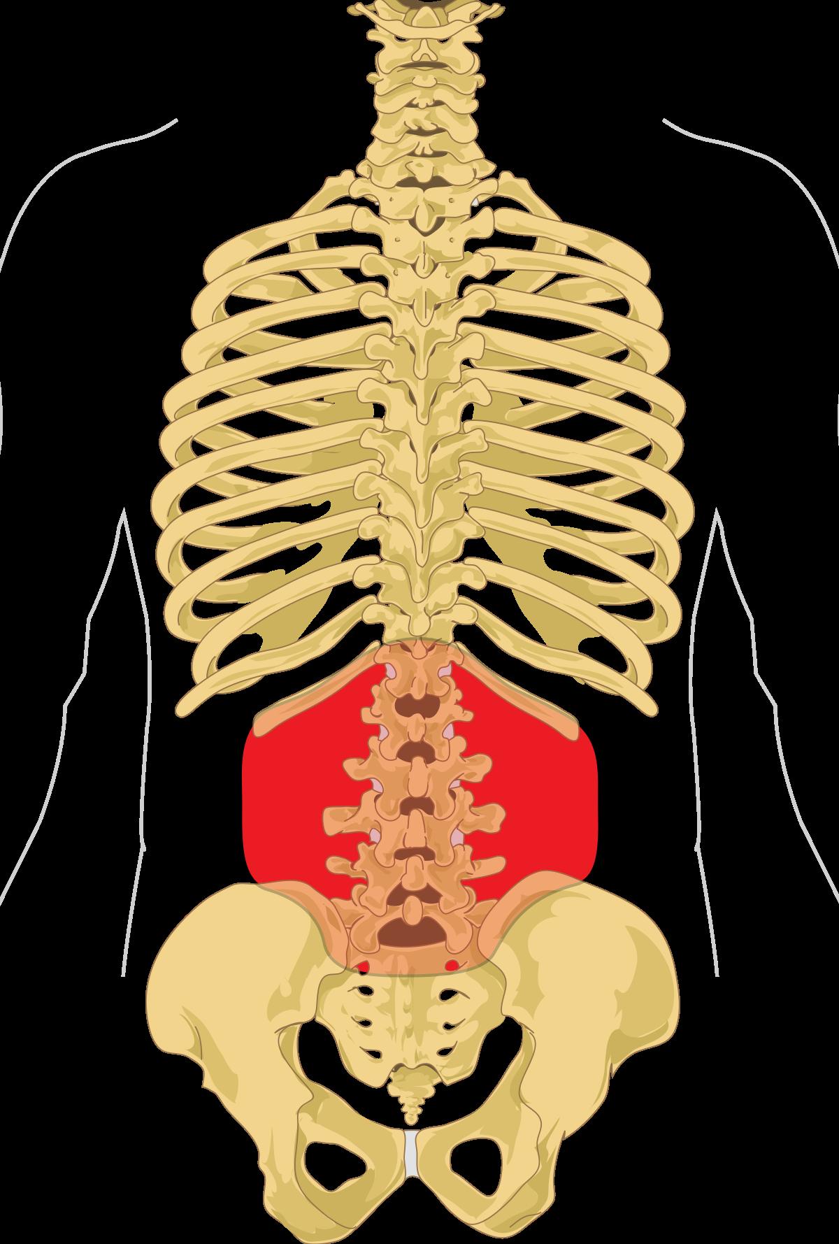 gerinc és ízületi betegség helyén