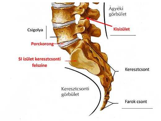 miért vállízületi fájdalom a második fokú térd deformáló artrózisa