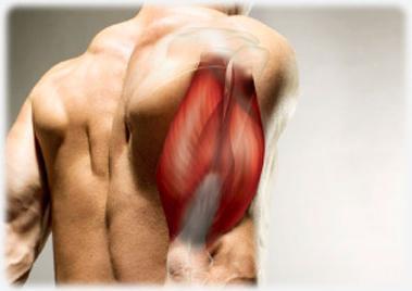 bicepsz a könyökízületben)