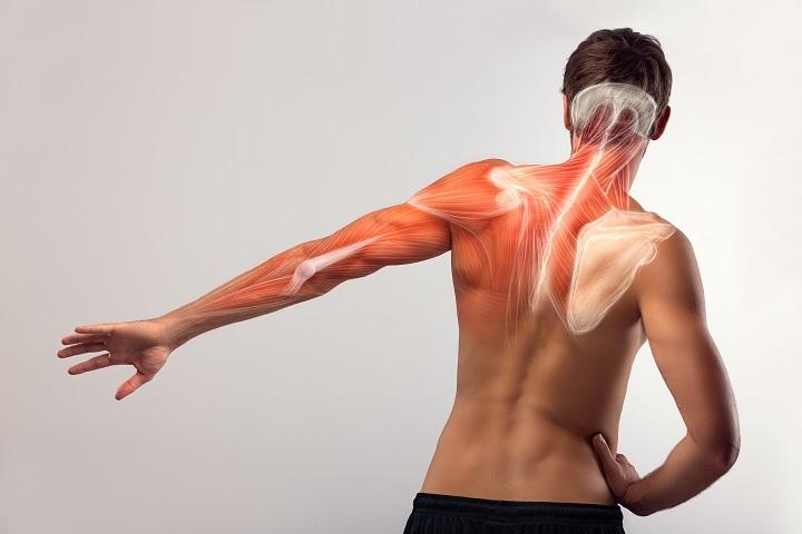 fájdalom a vállízület hátán)
