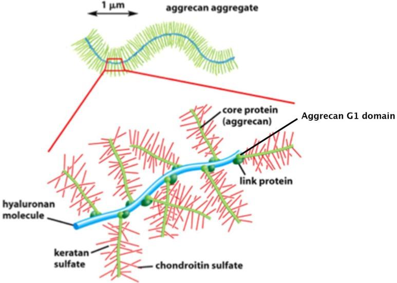 glükózamin-kondroitin bőrértékelések