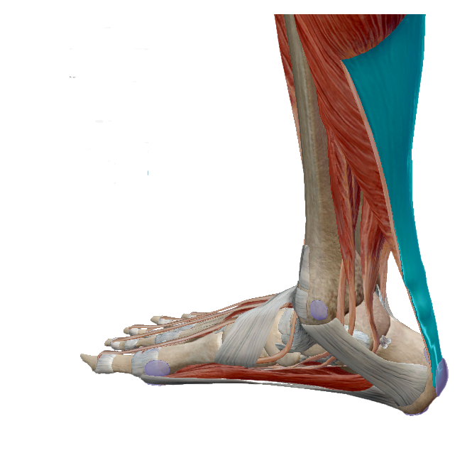 a sarok melletti láb ízülete fáj