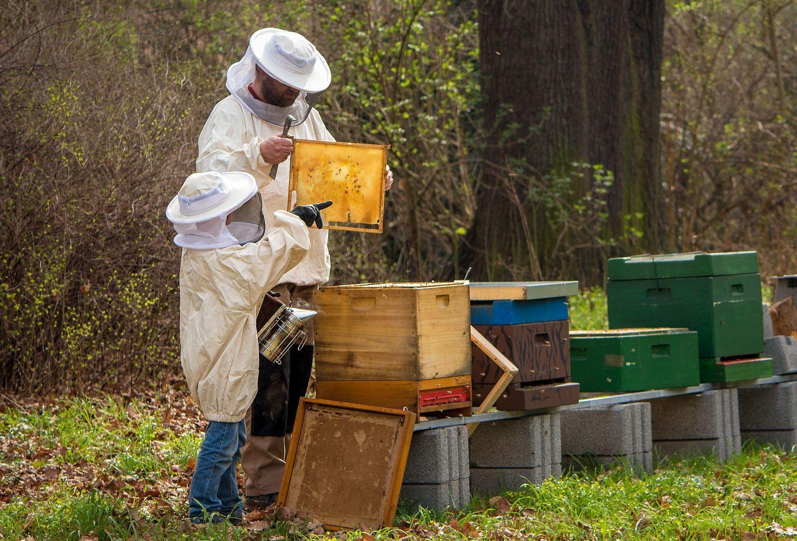 méhészeti termékek közös kezelésre
