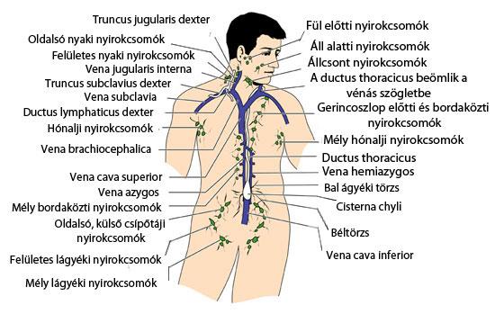 nyaki nyirokcsomók ízületi fájdalmak)
