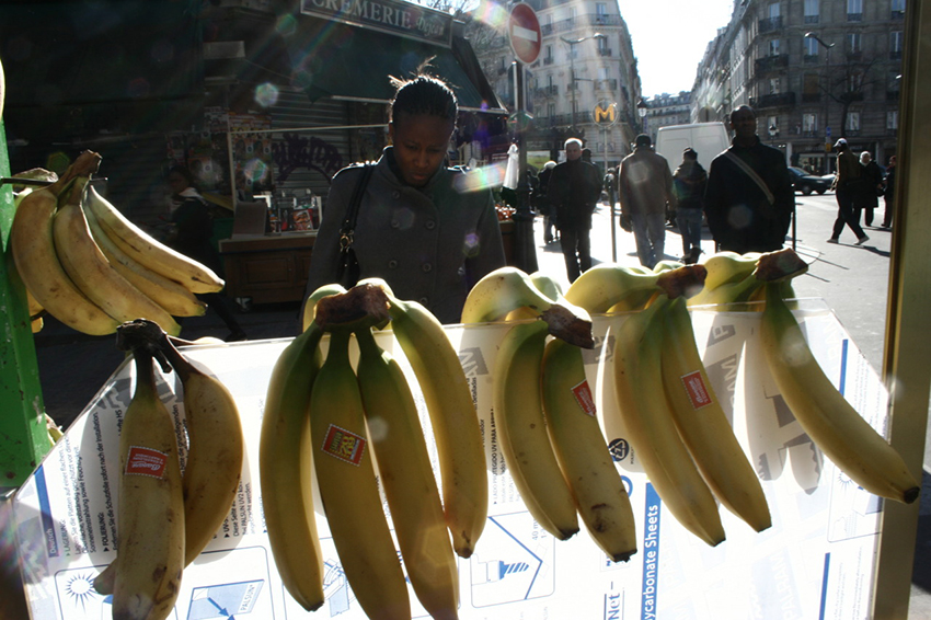 közös banán tinktúra