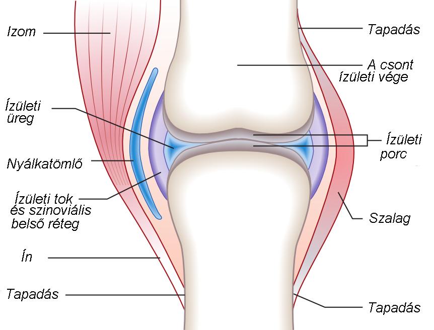 a csontokat összekötő szalagok károsodását hívják)