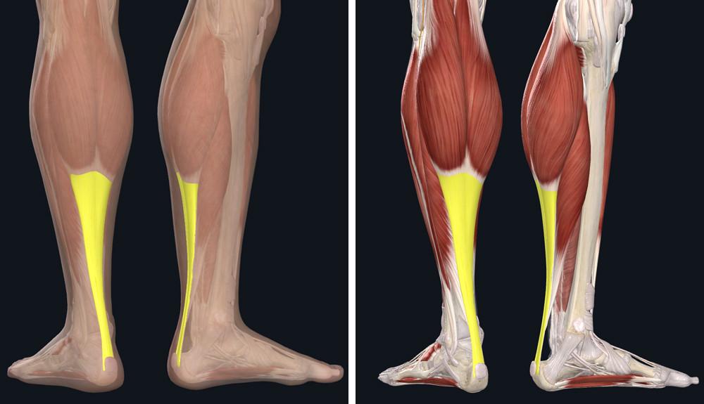 Mi lehet az Achilles-ín fájdalom oka? | Harmónia Centrum Blog