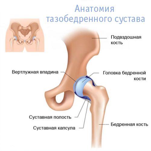 Ízületi porckopás (Arthrosis, artrózis)