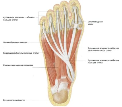 fájdalom a láb közös területén