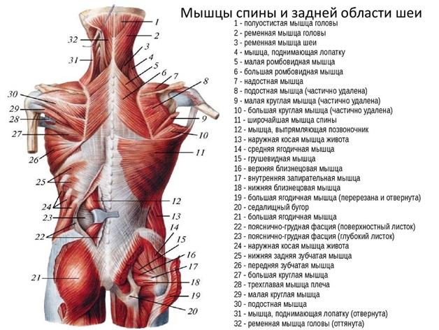 fájhatnak a csípőízületek a gerinctől