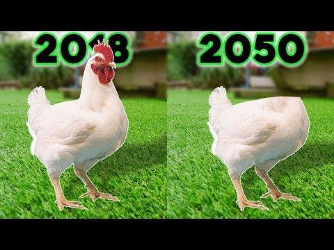 csirke ízületi betegség)