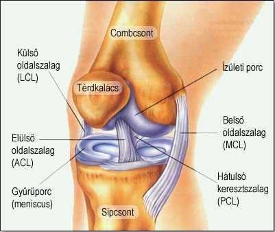 az elülső láb ízületének gyulladása