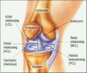 akupresszúra a térdízület fájdalmában glükokortikoidok ízületi fájdalmak