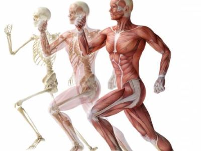az izmok ízületeinek ízületei csontritkulásos betegségei