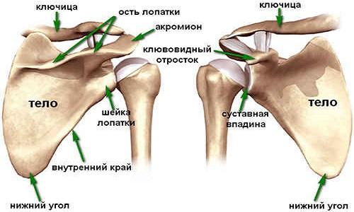 deformáló artrózis a vállízület mi ez