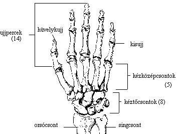 Fájó ízület a jobb kéz mutatóujján Ízületi gondot jelezhet