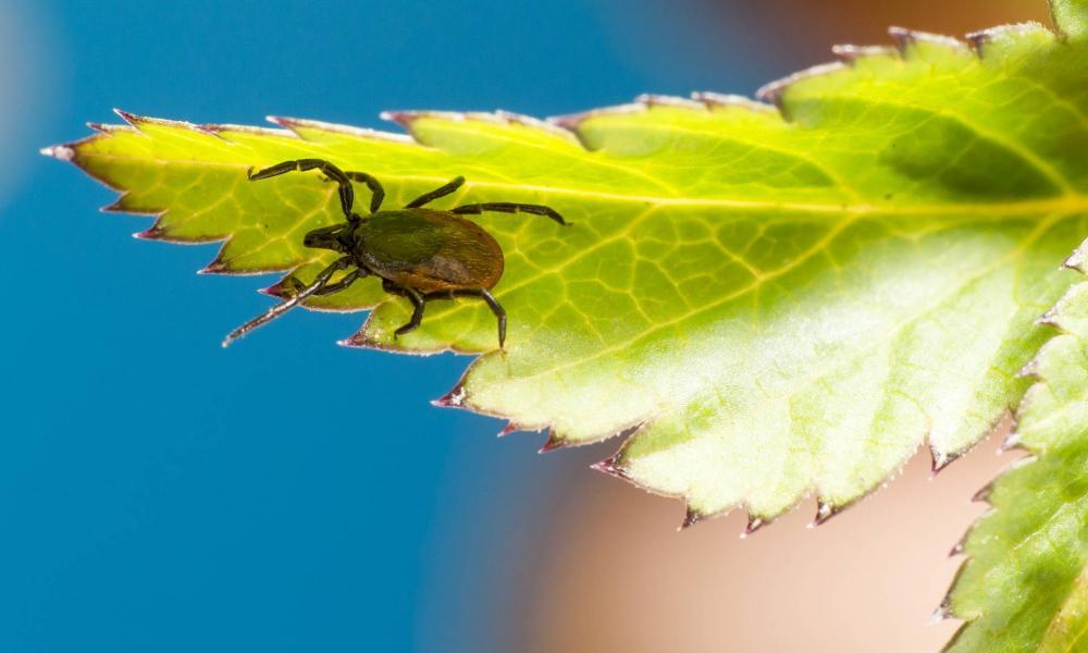 Pókcsípés: mikor kell félni?