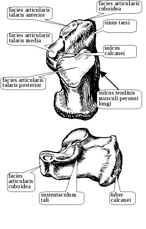 Káros-e a csontok ropogtatása? - Balance blog