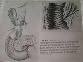 Minimál invazív térdízületi endoprotézis beültetés - Budapesti Mozgásszervi Magánrendelő