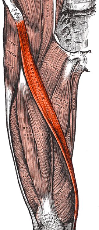 fájdalmak a csípőízületben
